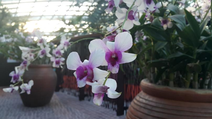 gardensbythebay
